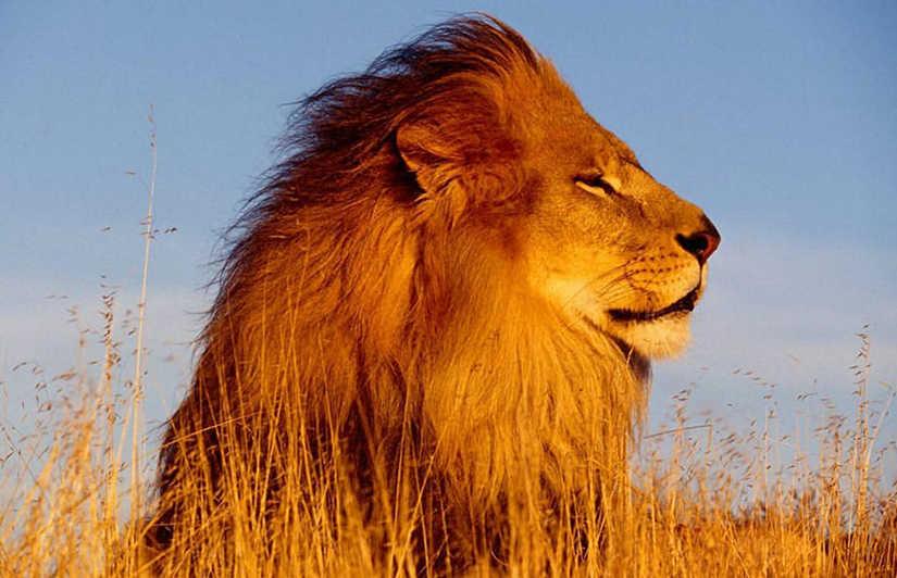 viajes-monoparentales-con-hijos-buscando-al-rey-leon-2016